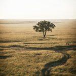 VIAJAR A KENIA Y TANZANIA